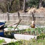 garden: day one