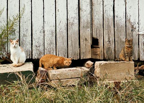 Barn Cats-11