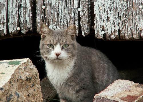 Barn Cats-2