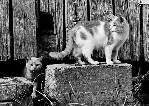 Barn Cats-13