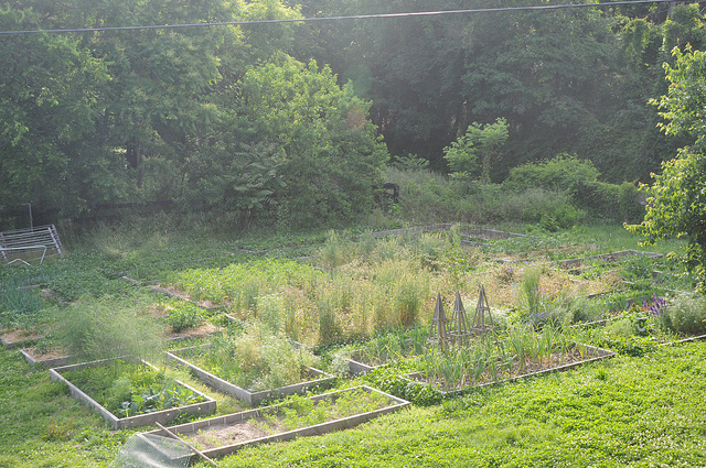 May 18 garden