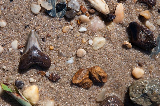 September fossil hunt
