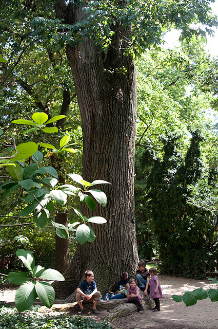 State Champion white ash tree