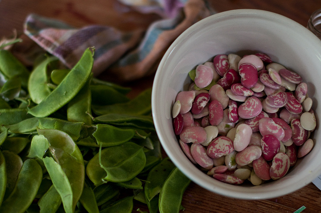 Christmas pole lima beans