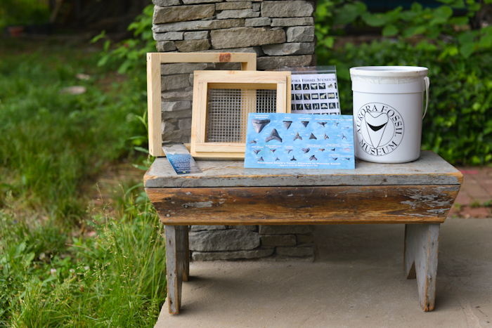 Fossil Hunting in a Box and Some Tips for Getting Started {giveaway}