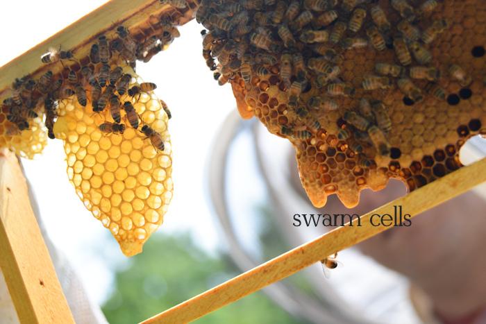 Swarm Saga