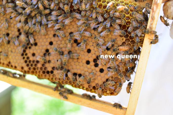 new queen