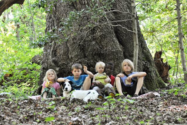 Big old oak 2009