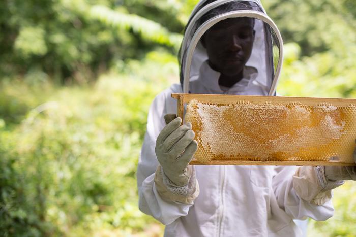 A little bit of honey