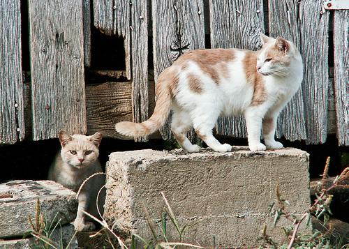 Barn Cats-5