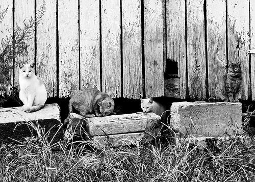 Barn Cats-12