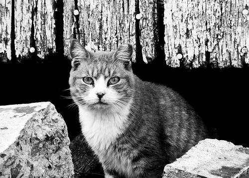 Barn Cats-6