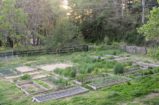 Garden Journal (April 13)