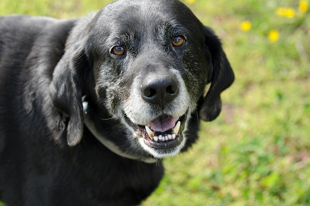 Leroy's dog, Worm
