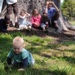 Remarkable Trees of Virginia:  Elkton bur oak
