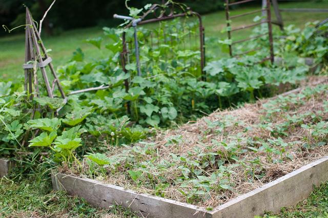 July 13 Garden