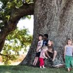 Remarkable Trees of Virginia: Oak Ridge Estate White Oak