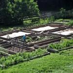 A very consuming garden