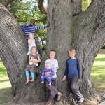 Remarkable Trees of Virginia: The Algernourne Oak