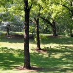 Remakable Trees of Virgnia: Dethroned Champion Black Walnut at Montpelier