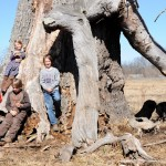 Remarkable Trees of Virginia: The Wilson Oak