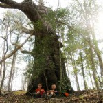 Our Remarkable Trees of Virginia Adventure