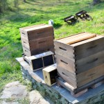 Two Hives of Busy Bees