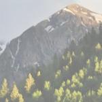 Little Spruce Organics {giveaway!}