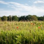 Big Meadows {July}